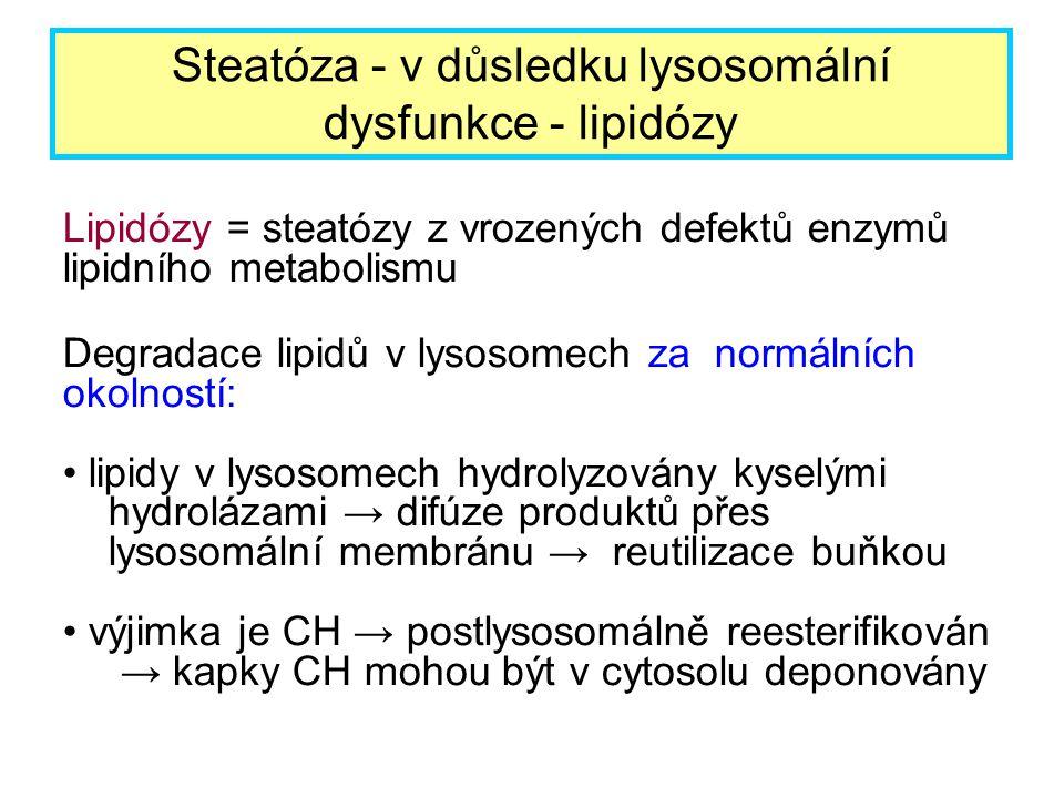 Lipidózy = steatózy z vrozených defektů enzymů lipidního metabolismu Degradace lipidů v lysosomech za normálních okolností: lipidy v lysosomech hydrol