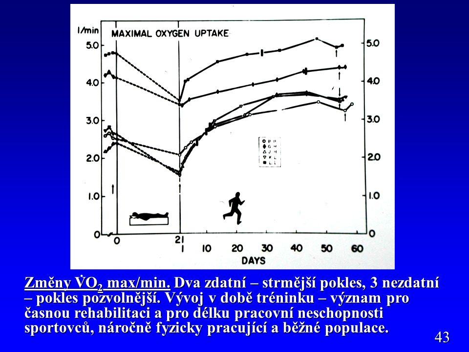 Změny VO 2 max/min. Dva zdatní – strmější pokles, 3 nezdatní – pokles pozvolnější.