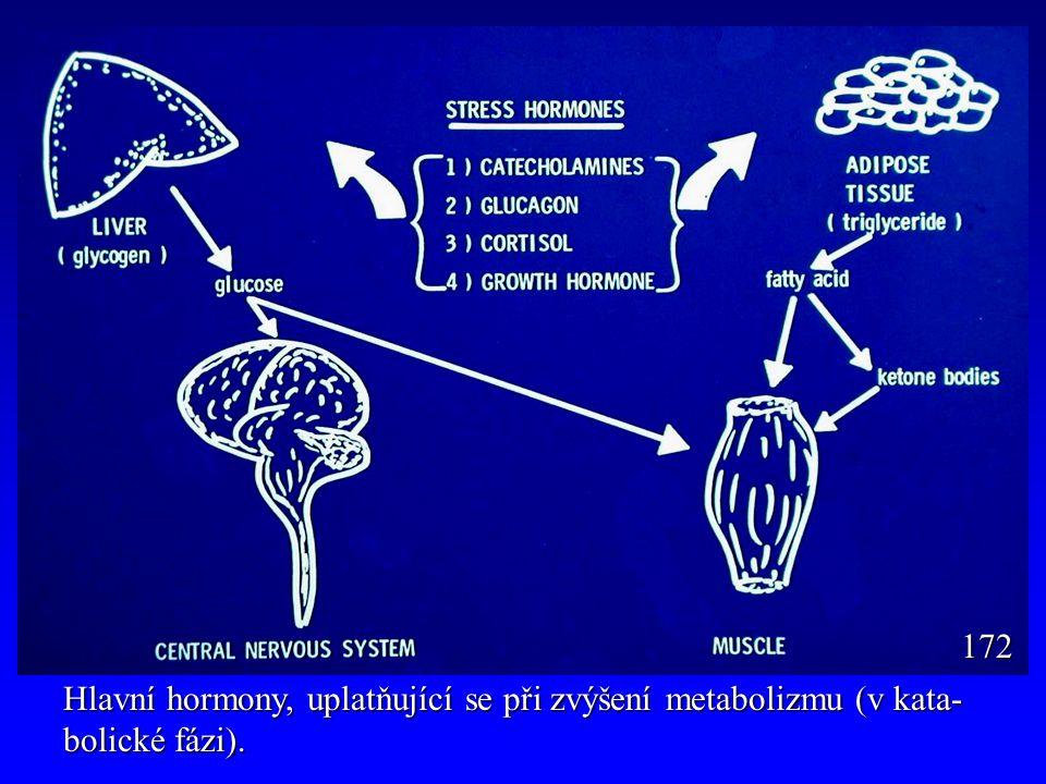 Relativní změny v hladinách hormonů v katabolické fázi (během fyzické práce).