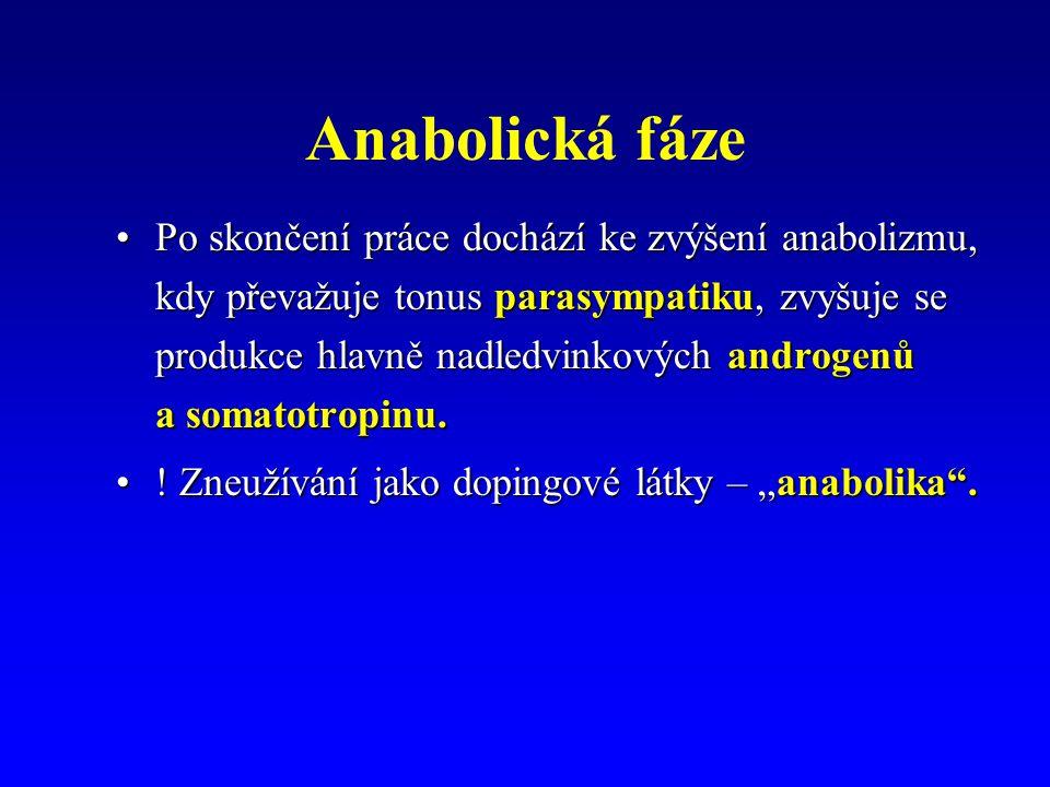 Anabolická fáze Po skončení práce dochází ke zvýšení anabolizmu, kdy převažuje tonus parasympatiku, zvyšuje se produkce hlavně nadledvinkových androgenů a somatotropinu.Po skončení práce dochází ke zvýšení anabolizmu, kdy převažuje tonus parasympatiku, zvyšuje se produkce hlavně nadledvinkových androgenů a somatotropinu.