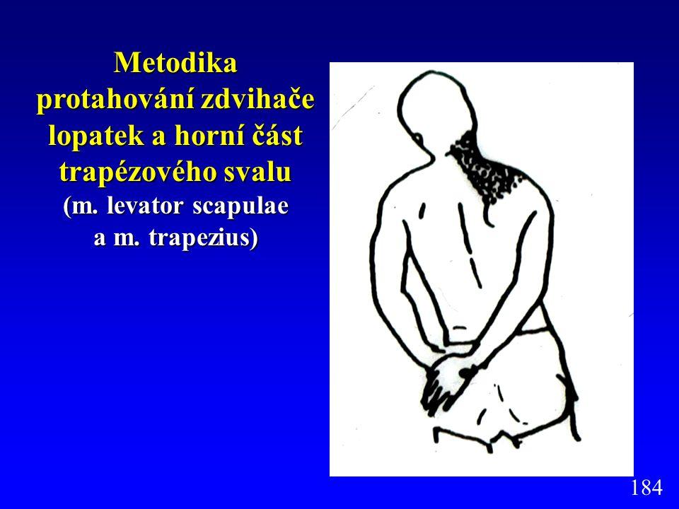 Metodika protahování zdvihače lopatek a horní část trapézového svalu (m. levator scapulae a m. trapezius) 184