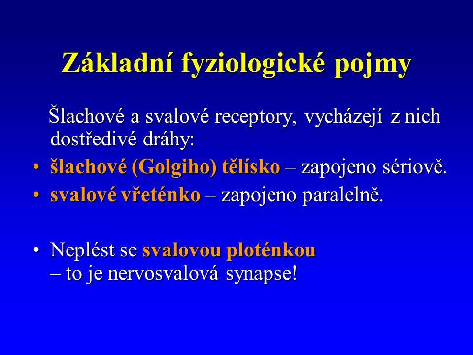 Základní fyziologické pojmy Šlachové a svalové receptory, vycházejí z nich dostředivé dráhy: Šlachové a svalové receptory, vycházejí z nich dostředivé