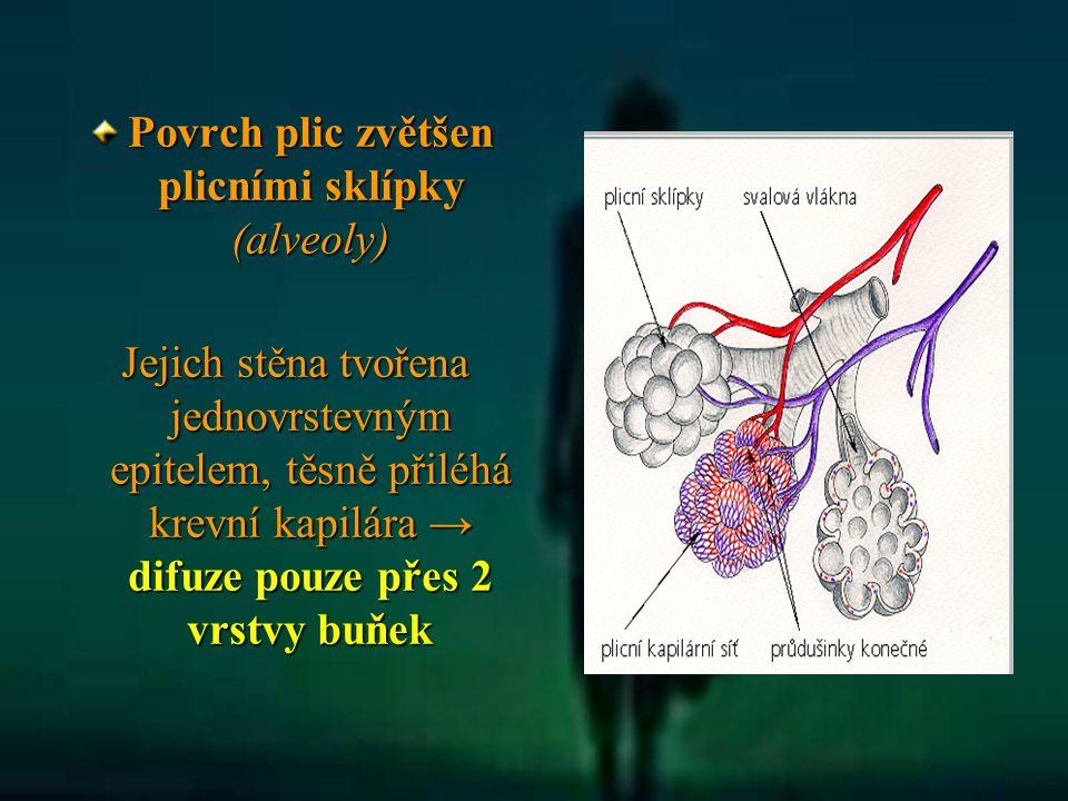 Povrch plic zvětšen plicními sklípky (alveoly) Jejich stěna tvořena jednovrstevným epitelem, těsně přiléhá krevní kapilára → difuze pouze přes 2 vrstv