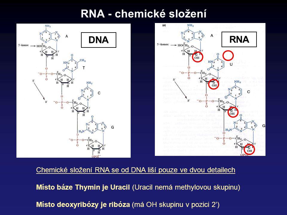 RNA - chemické složení Chemické složení RNA se od DNA liší pouze ve dvou detailech Místo báze Thymin je Uracil (Uracil nemá methylovou skupinu) Místo