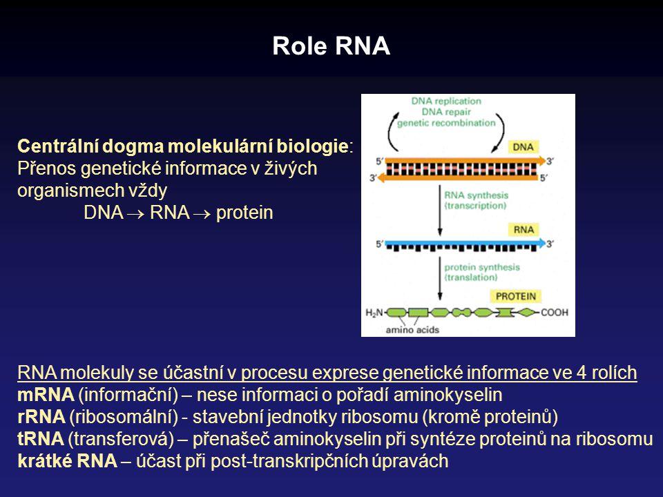 Role RNA RNA molekuly se účastní v procesu exprese genetické informace ve 4 rolích mRNA (informační) – nese informaci o pořadí aminokyselin rRNA (ribo