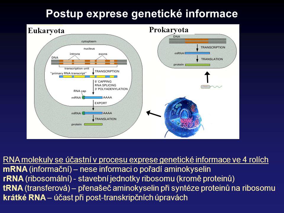 Eukaryota Prokaryota Postup exprese genetické informace RNA molekuly se účastní v procesu exprese genetické informace ve 4 rolích mRNA (informační) –