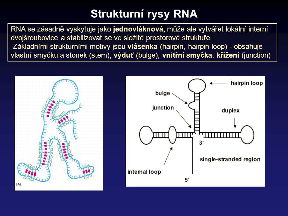 Strukturní rysy RNA RNA se zásadně vyskytuje jako jednovláknová, může ale vytvářet lokální interní dvojšroubovice a stabilizovat se ve složité prostor