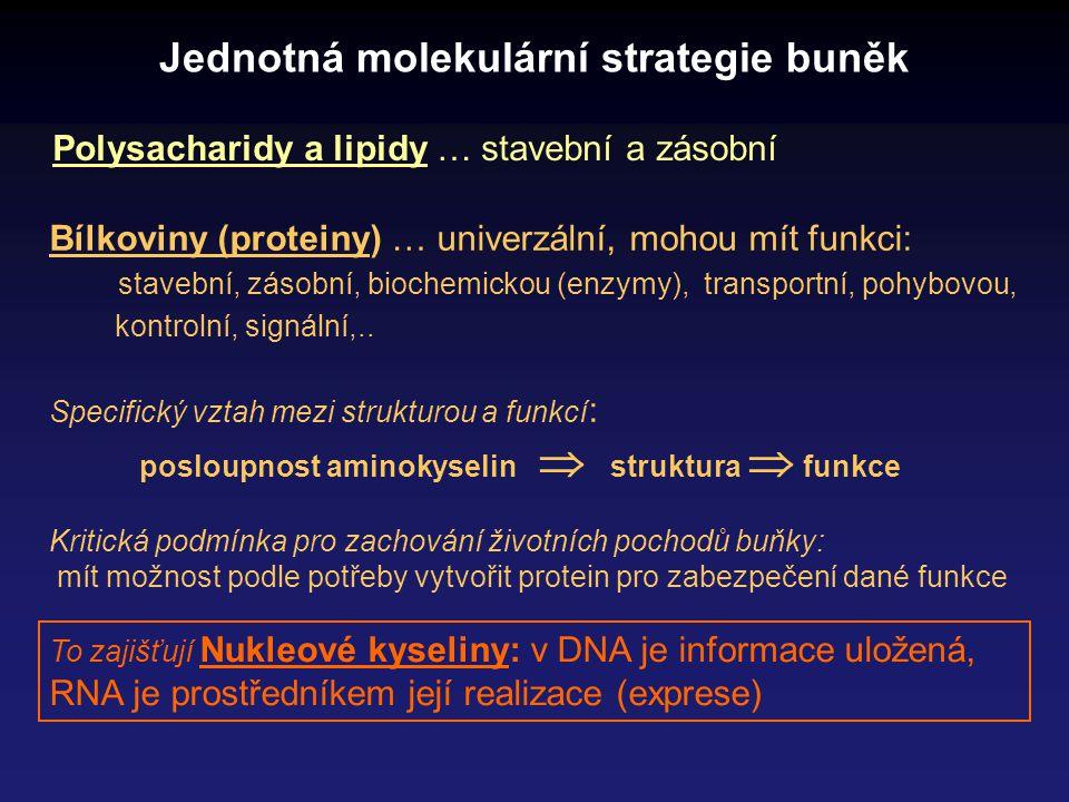 Centrální dogma molekulární biologie Přenos genetické informace v živých organismech vždy DNA  RNA  protein