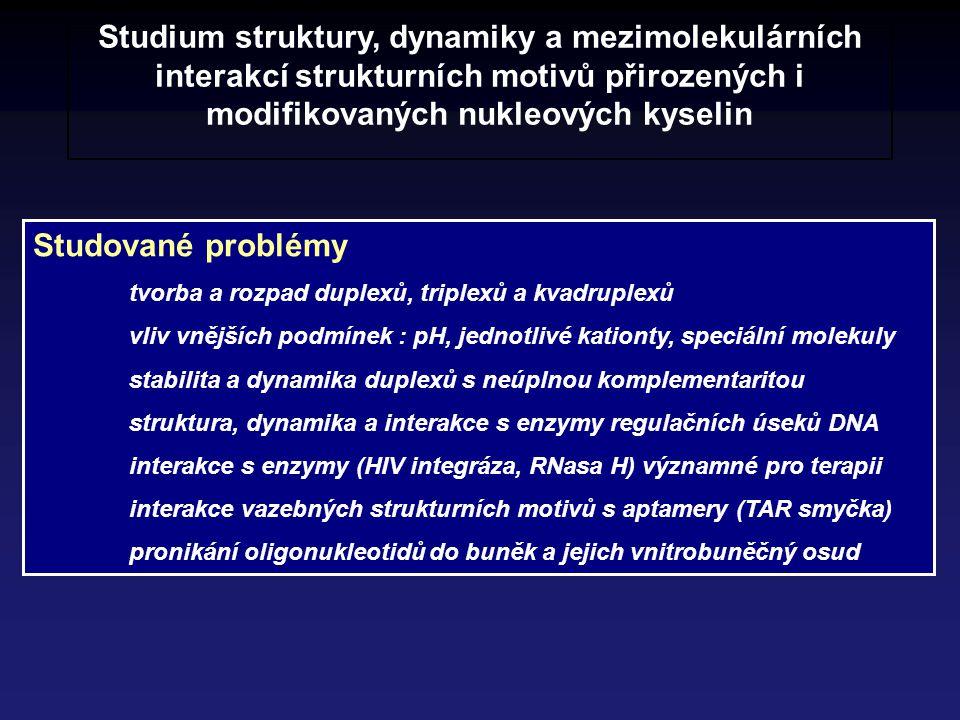 Studium struktury, dynamiky a mezimolekulárních interakcí strukturních motivů přirozených i modifikovaných nukleových kyselin Studované problémy tvorb