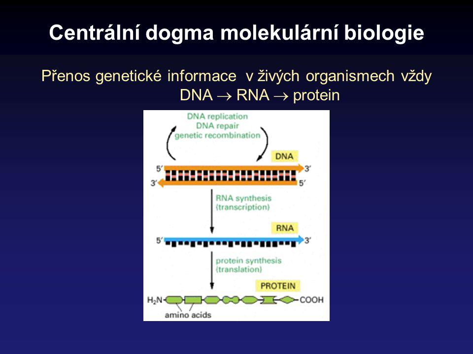 Přenos genetické informace podle principu KOMPLEMENTARITY pouze bázové páry A:T, G:C Zápis genetické informace U všech organismů se zápis genetické informace realizuje v molekule DNA = deoxyribonukleová kyselina a to pořadím čtyř bází: A denin, C ytosin, G uanin, T hymin