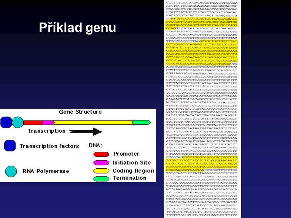 Role RNA RNA molekuly se účastní v procesu exprese genetické informace ve 4 rolích mRNA (informační) – nese informaci o pořadí aminokyselin rRNA (ribosomální) - stavební jednotky ribosomu (kromě proteinů) tRNA (transferová) – přenašeč aminokyselin při syntéze proteinů na ribosomu krátké RNA – účast při post-transkripčních úpravách Centrální dogma molekulární biologie: Přenos genetické informace v živých organismech vždy DNA  RNA  protein