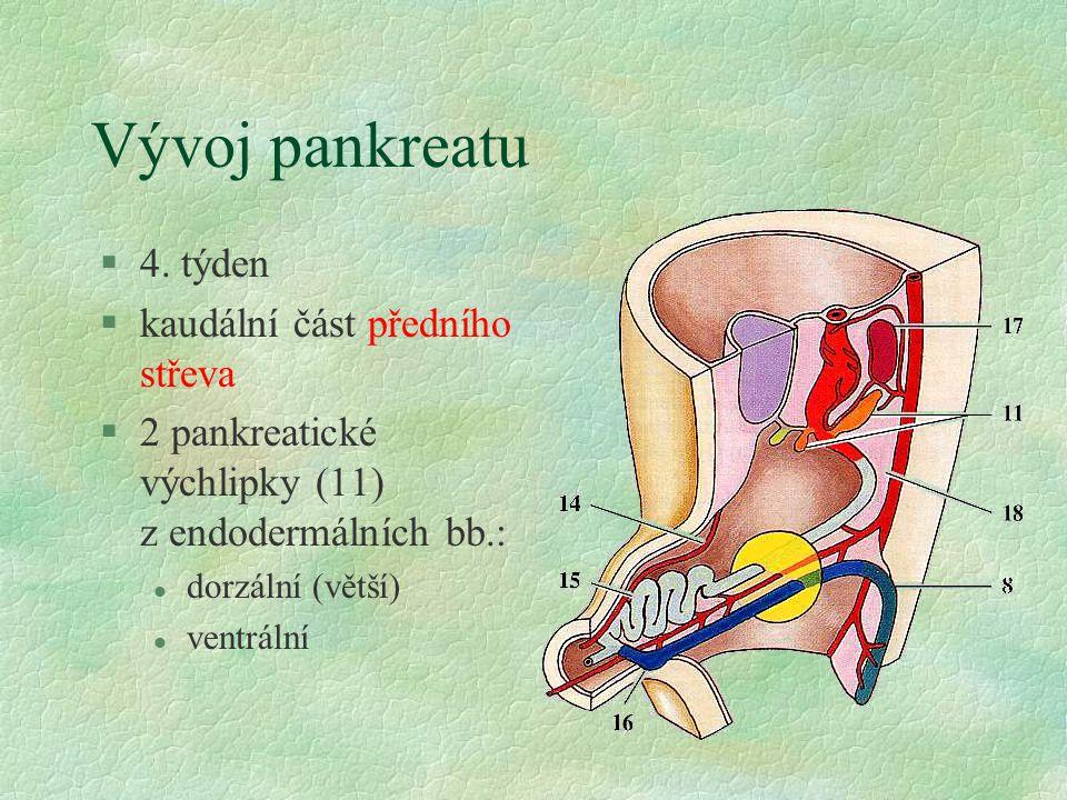Vývoj pankreatu §4. týden §kaudální část předního střeva §2 pankreatické výchlipky (11) z endodermálních bb.: l dorzální (větší) l ventrální