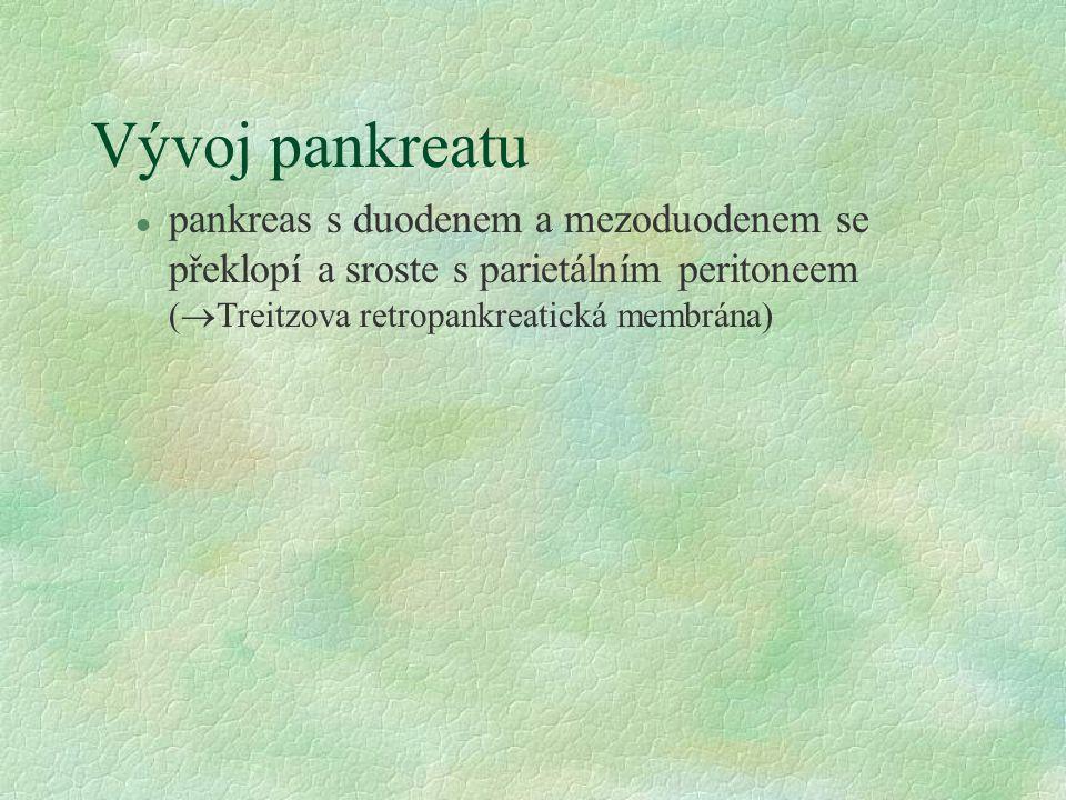 Vývoj pankreatu l pankreas s duodenem a mezoduodenem se překlopí a sroste s parietálním peritoneem (  Treitzova retropankreatická membrána)