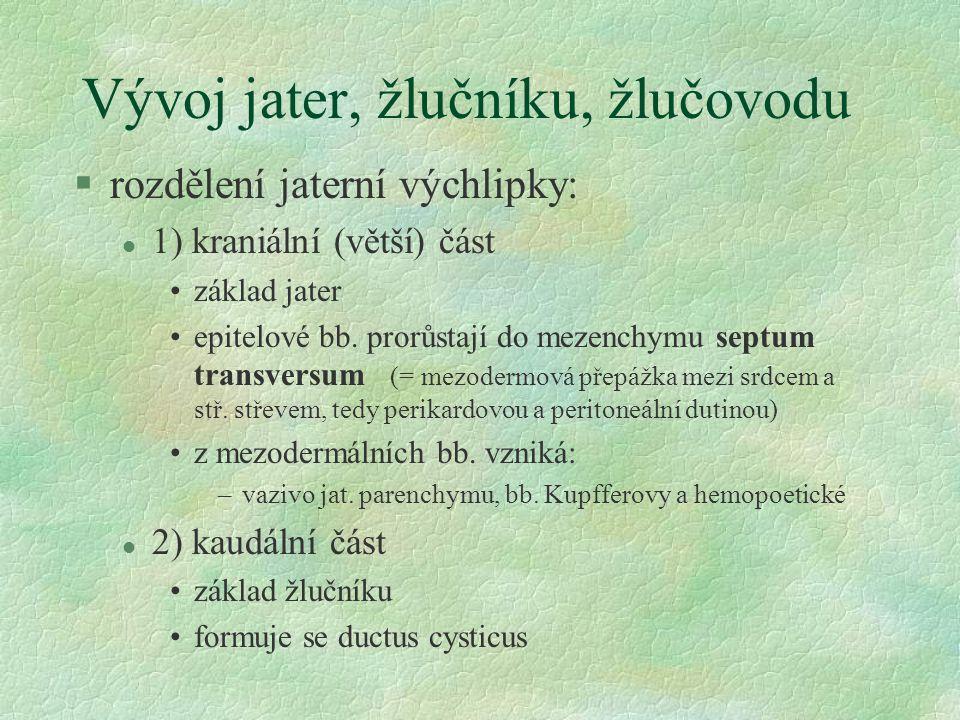 §hepatocyt - polyedrická eosinofilní buňka, velké sférické jádro (i polyploidní), hladké i drsné ER,  mitochondrií §žlučový kanálek §těsná spojení §mikroklky §Disseho prostor (subendotelová štěrbina) §endotel