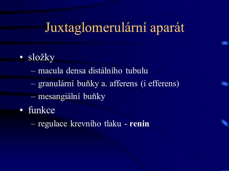 Juxtaglomerulární aparát složky –macula densa distálního tubulu –granulární buňky a. afferens (i efferens) –mesangiální buňky funkce –regulace krevníh