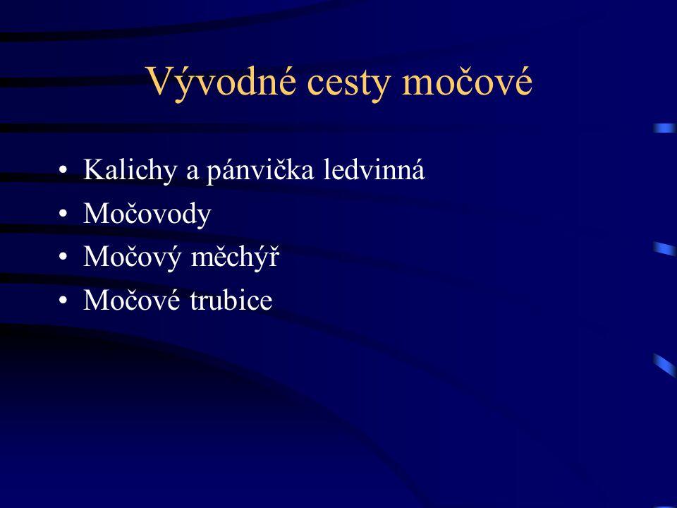 Vývodné cesty močové Kalichy a pánvička ledvinná Močovody Močový měchýř Močové trubice