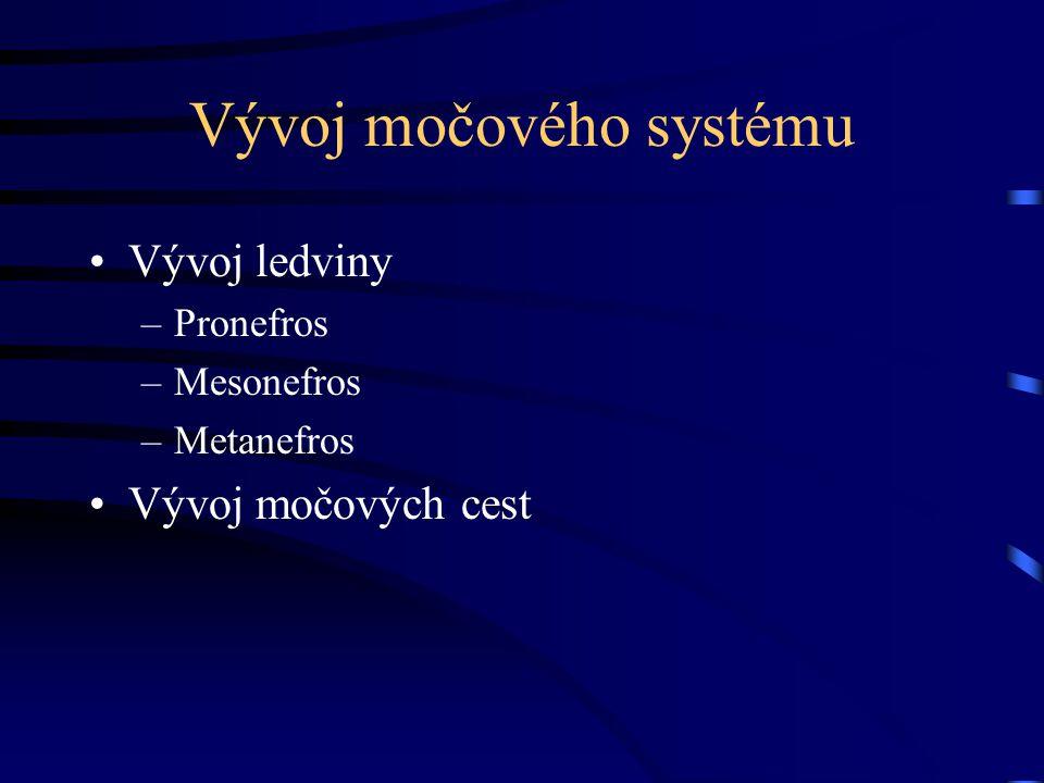 Vývoj močového systému Vývoj ledviny –Pronefros –Mesonefros –Metanefros Vývoj močových cest