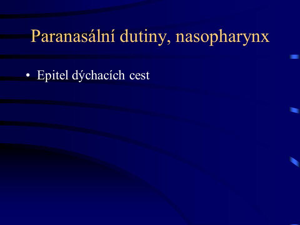Paranasální dutiny, nasopharynx Epitel dýchacích cest