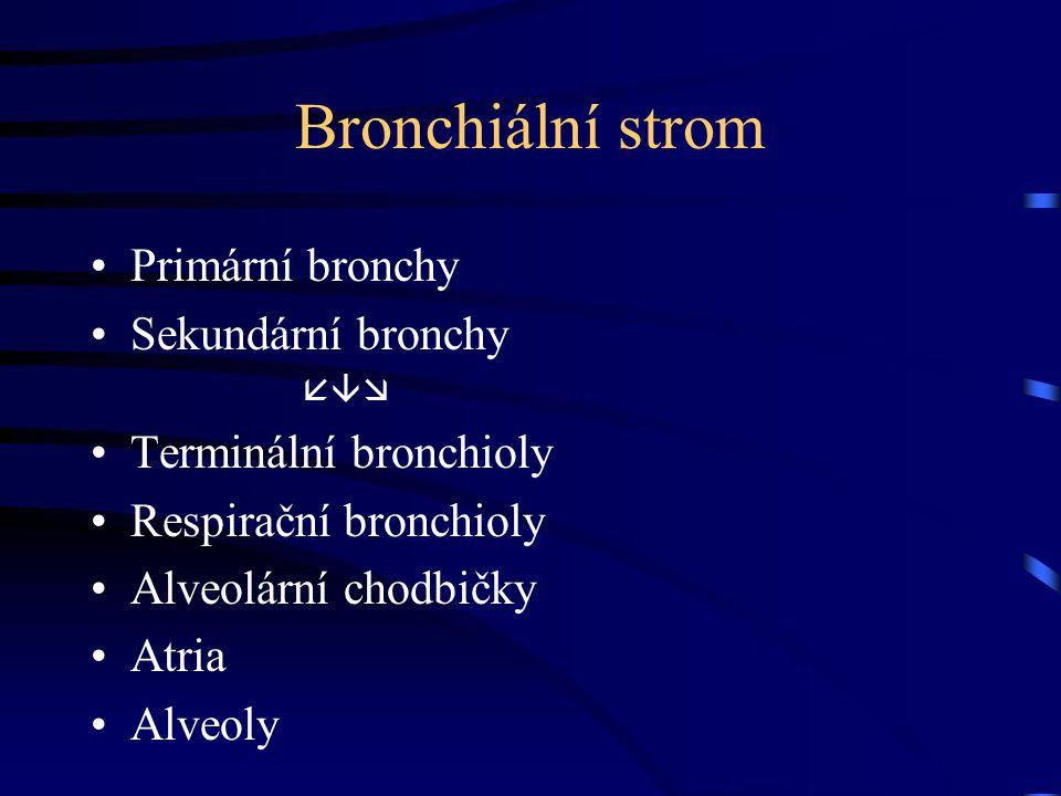 Bronchiální strom Primární bronchy Sekundární bronchy  Terminální bronchioly Respirační bronchioly Alveolární chodbičky Atria Alveoly