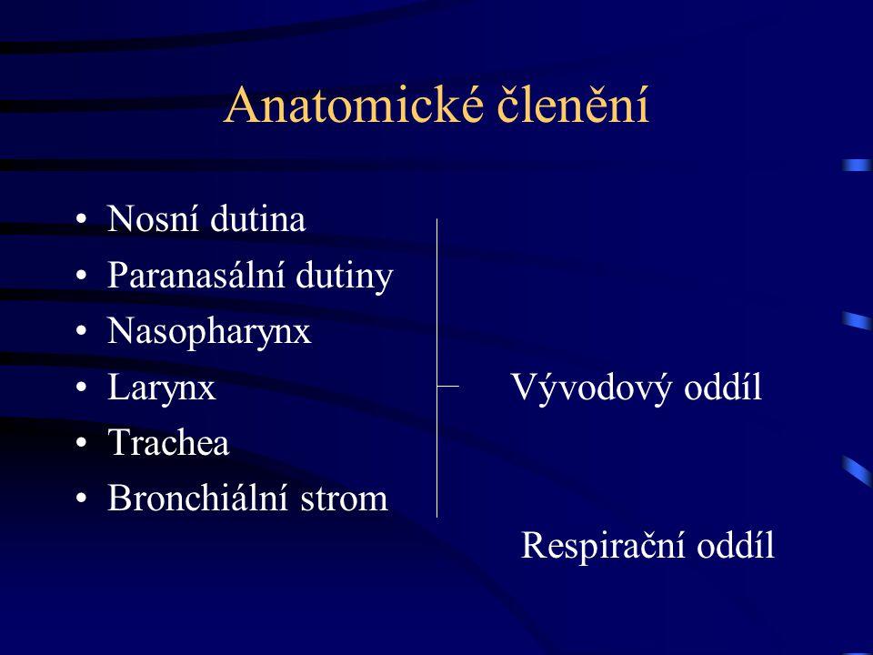 Anatomické členění Nosní dutina Paranasální dutiny Nasopharynx Larynx Vývodový oddíl Trachea Bronchiální strom Respirační oddíl
