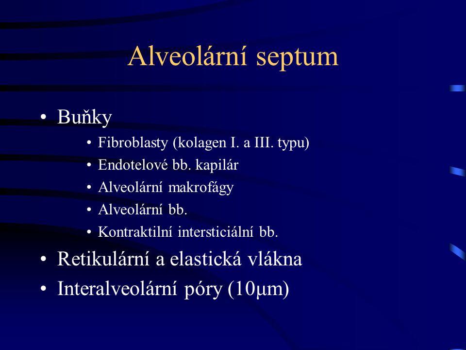 Alveolární septum Buňky Fibroblasty (kolagen I. a III. typu) Endotelové bb. kapilár Alveolární makrofágy Alveolární bb. Kontraktilní intersticiální bb