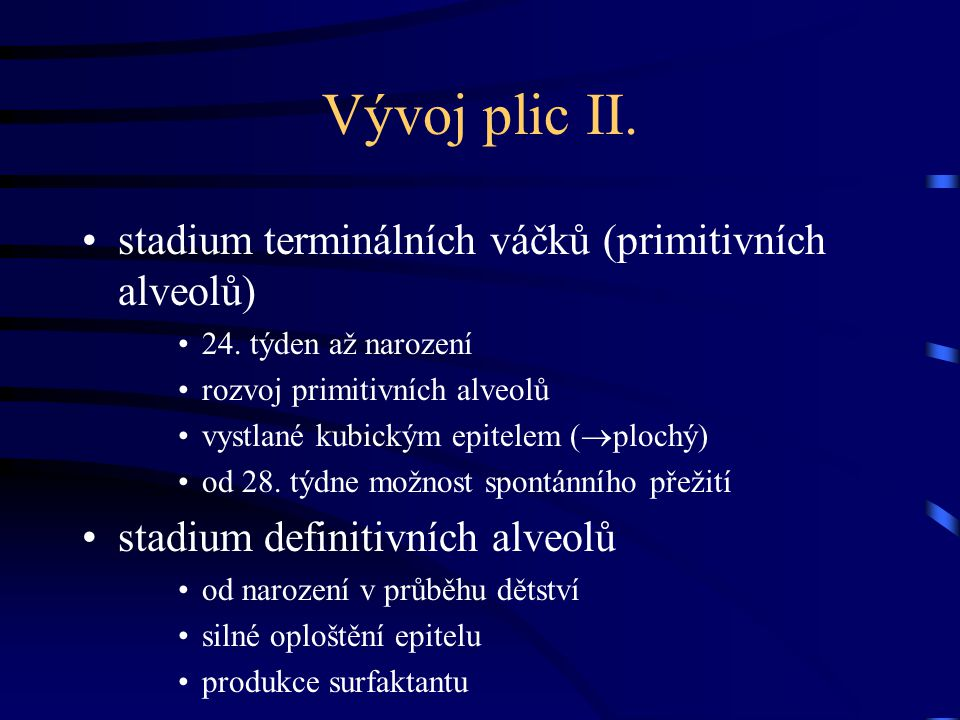 Vývoj plic II.stadium terminálních váčků (primitivních alveolů) 24.