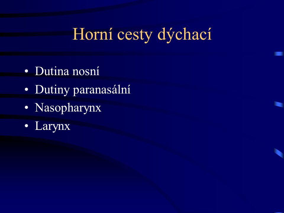 Horní cesty dýchací Dutina nosní Dutiny paranasální Nasopharynx Larynx