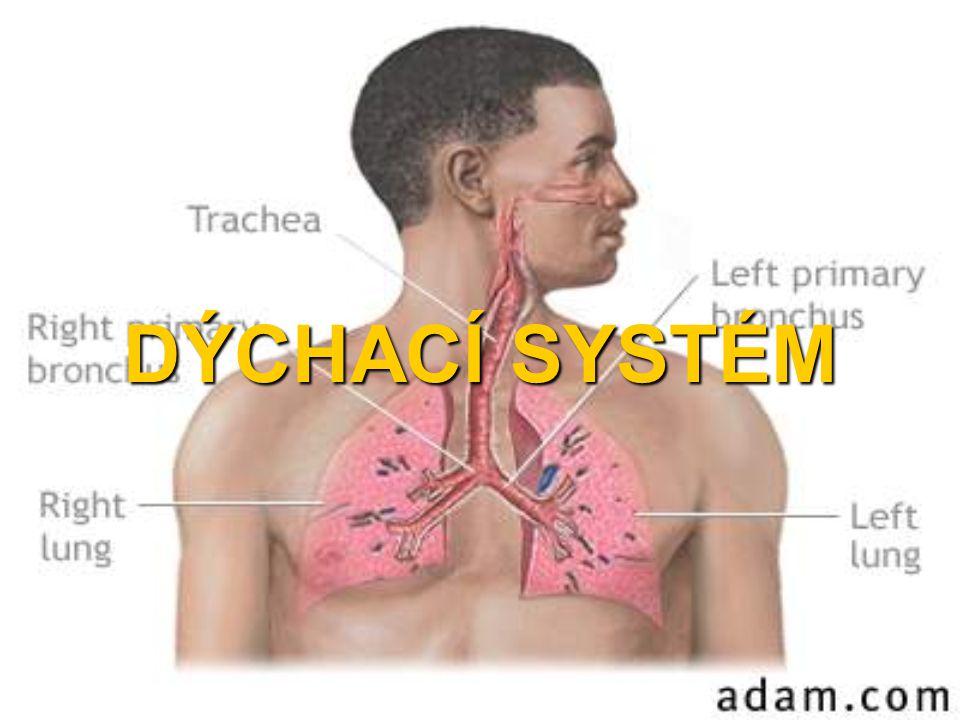 Anatomické členění Vývodový oddíl: Nosní dutina Paranasální dutiny Nasopharynx Larynx Trachea Bronchiální strom po terminální bronchioly.