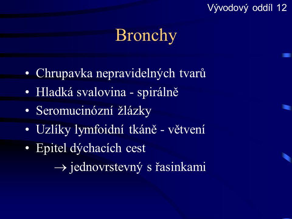 Bronchy Chrupavka nepravidelných tvarů Hladká svalovina - spirálně Seromucinózní žlázky Uzlíky lymfoidní tkáně - větvení Epitel dýchacích cest  jedno