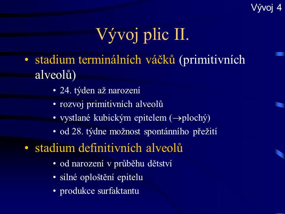 Vývoj plic II. stadium terminálních váčků (primitivních alveolů) 24. týden až narození rozvoj primitivních alveolů vystlané kubickým epitelem (  ploc
