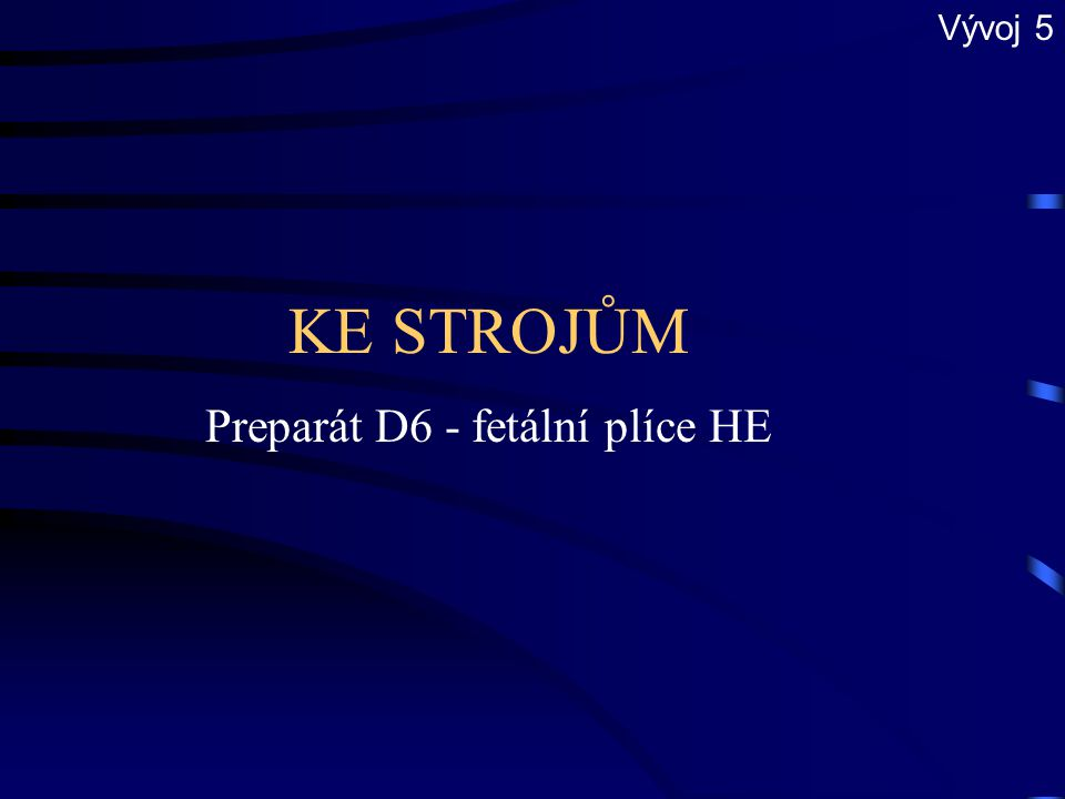 KE STROJŮM Preparát D5 - plíce HE Respirační oddíl 6
