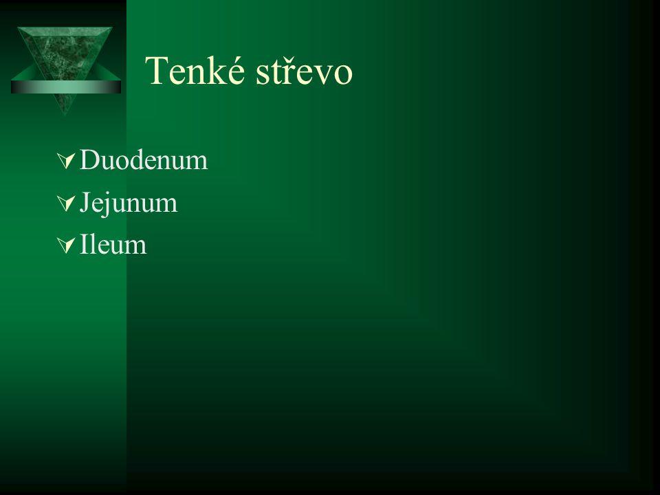 Tenké střevo  Duodenum  Jejunum  Ileum