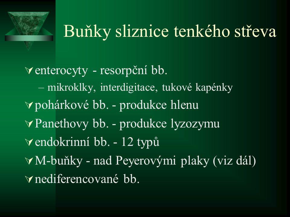 Buňky sliznice tenkého střeva  enterocyty - resorpční bb. –mikroklky, interdigitace, tukové kapénky  pohárkové bb. - produkce hlenu  Panethovy bb.