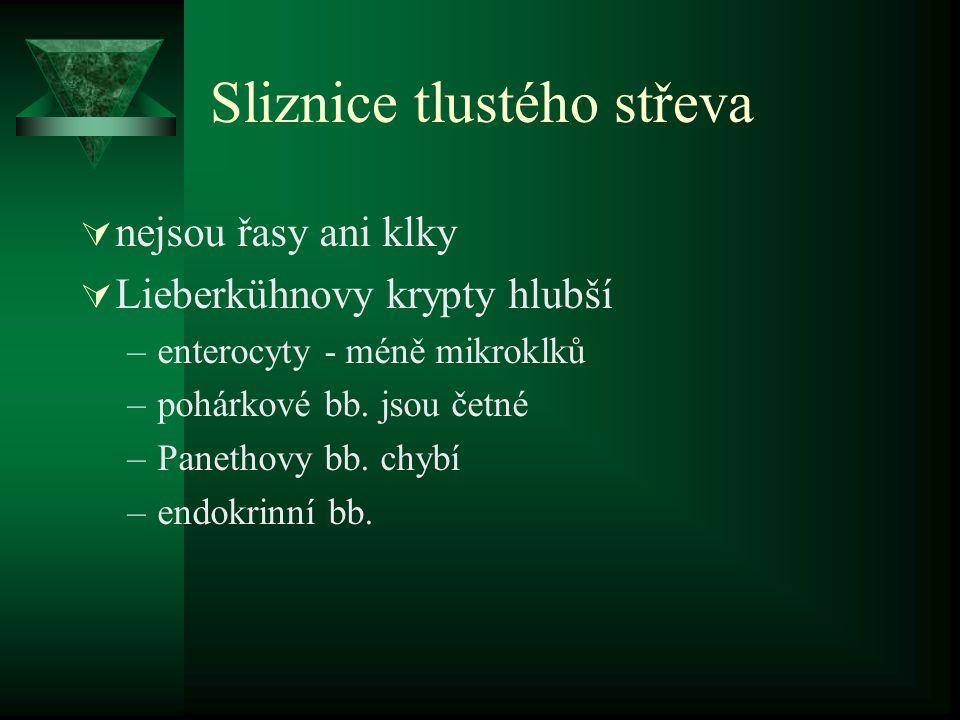 Sliznice tlustého střeva  nejsou řasy ani klky  Lieberkühnovy krypty hlubší –enterocyty - méně mikroklků –pohárkové bb. jsou četné –Panethovy bb. ch