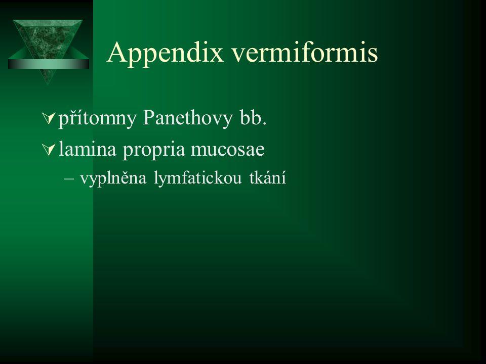 Appendix vermiformis  přítomny Panethovy bb.  lamina propria mucosae –vyplněna lymfatickou tkání