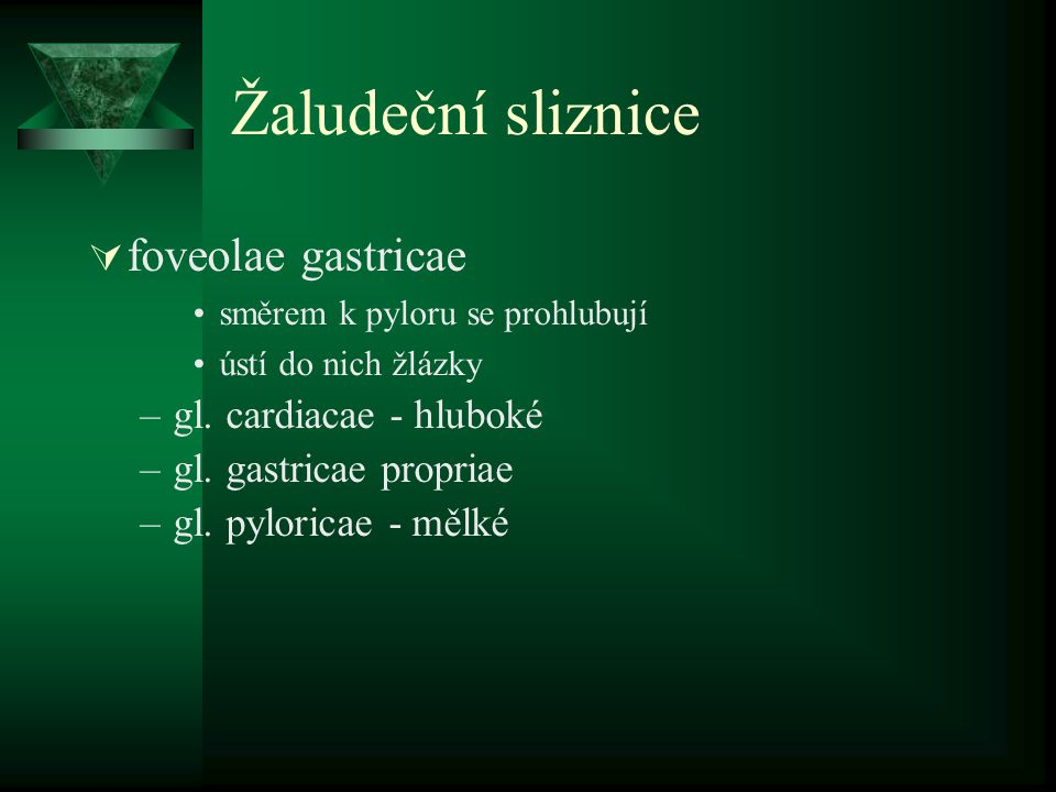 Preparát 12 / Z13 – Duodenum HE