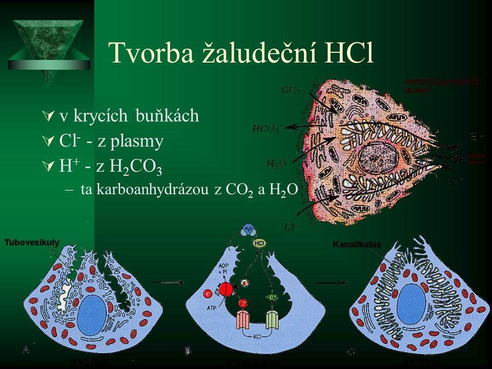 Tvorba žaludeční HCl  v krycích buňkách  Cl - - z plasmy  H + - z H 2 CO 3 –ta karboanhydrázou z CO 2 a H 2 O