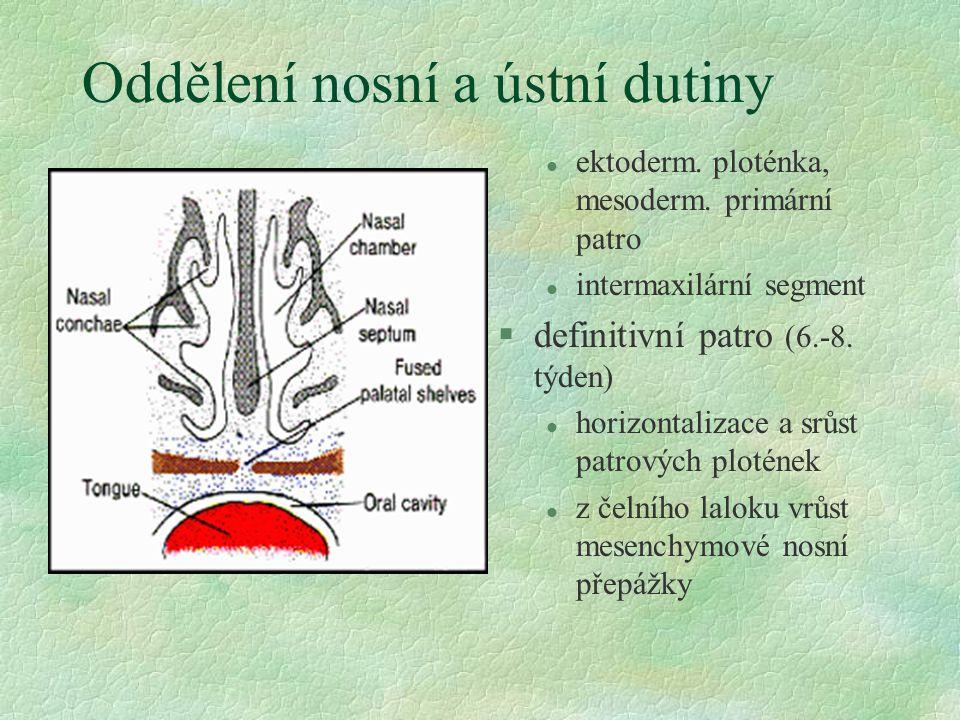 Oddělení nosní a ústní dutiny l ektoderm. ploténka, mesoderm. primární patro l intermaxilární segment §definitivní patro (6.-8. týden) l horizontaliza