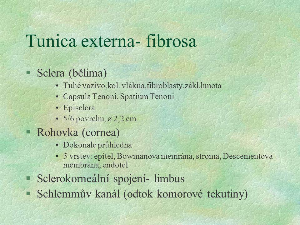 Tunica externa- fibrosa §Sclera (bělima) Tuhé vazivo,kol. vlákna,fibroblasty,zákl.hmota Capsula Tenoni, Spatium Tenoni Episclera 5/6 povrchu, ø 2,2 cm