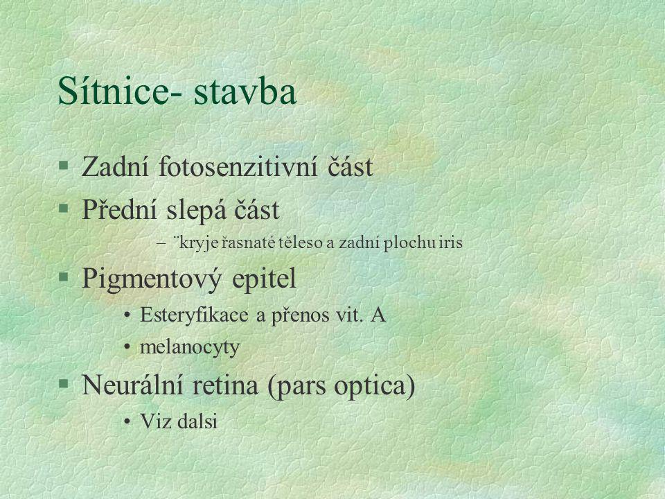 Sítnice- stavba §Zadní fotosenzitivní část §Přední slepá část –¨kryje řasnaté těleso a zadní plochu iris §Pigmentový epitel Esteryfikace a přenos vit.