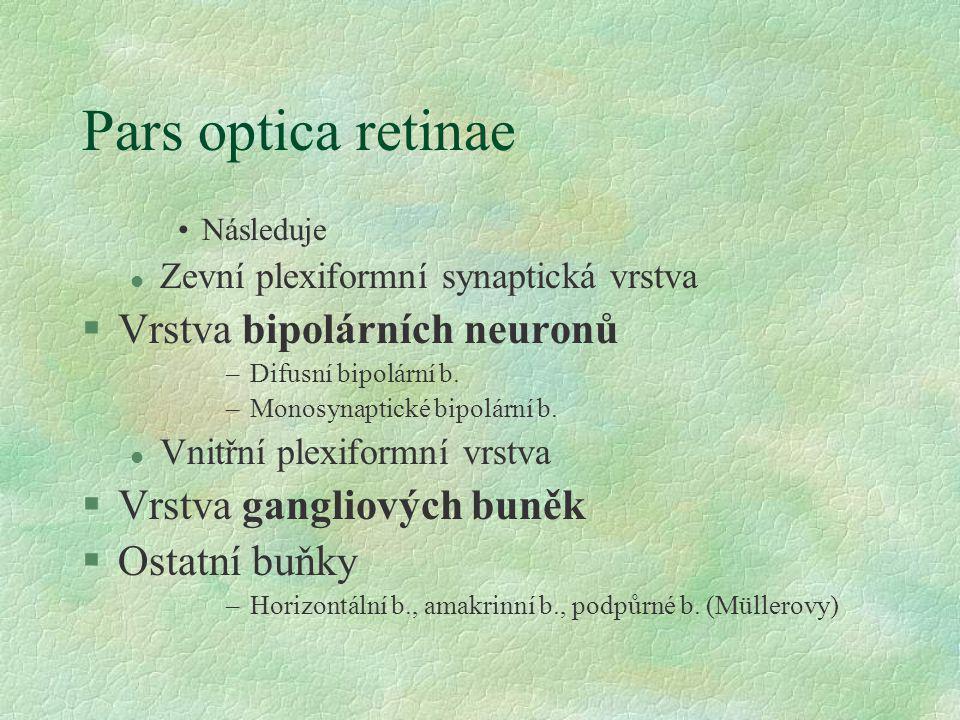 Pars optica retinae Následuje l Zevní plexiformní synaptická vrstva §Vrstva bipolárních neuronů –Difusní bipolární b. –Monosynaptické bipolární b. l V