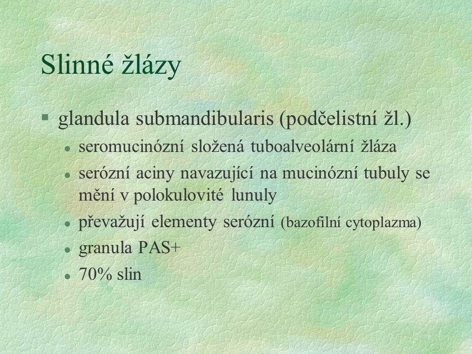 Slinné žlázy §glandula submandibularis (podčelistní žl.) l seromucinózní složená tuboalveolární žláza l serózní aciny navazující na mucinózní tubuly se mění v polokulovité lunuly l převažují elementy serózní (bazofilní cytoplazma) l granula PAS+ l 70% slin