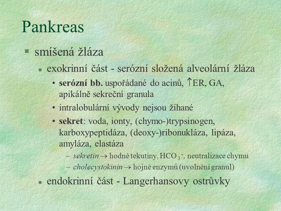 Pankreas §smíšená žláza l exokrinní část - serózní složená alveolární žláza serózní bb.