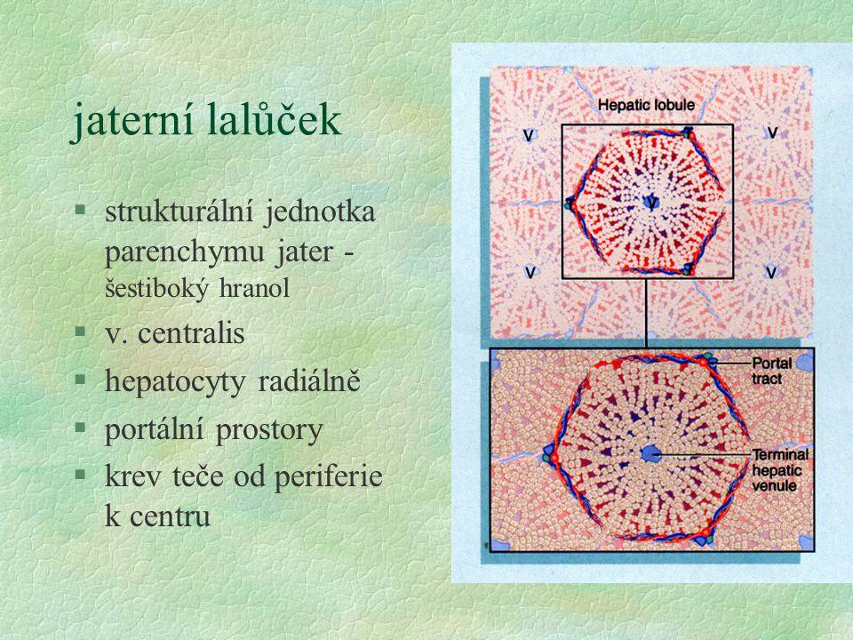 jaterní lalůček §strukturální jednotka parenchymu jater - šestiboký hranol §v. centralis §hepatocyty radiálně §portální prostory §krev teče od perifer