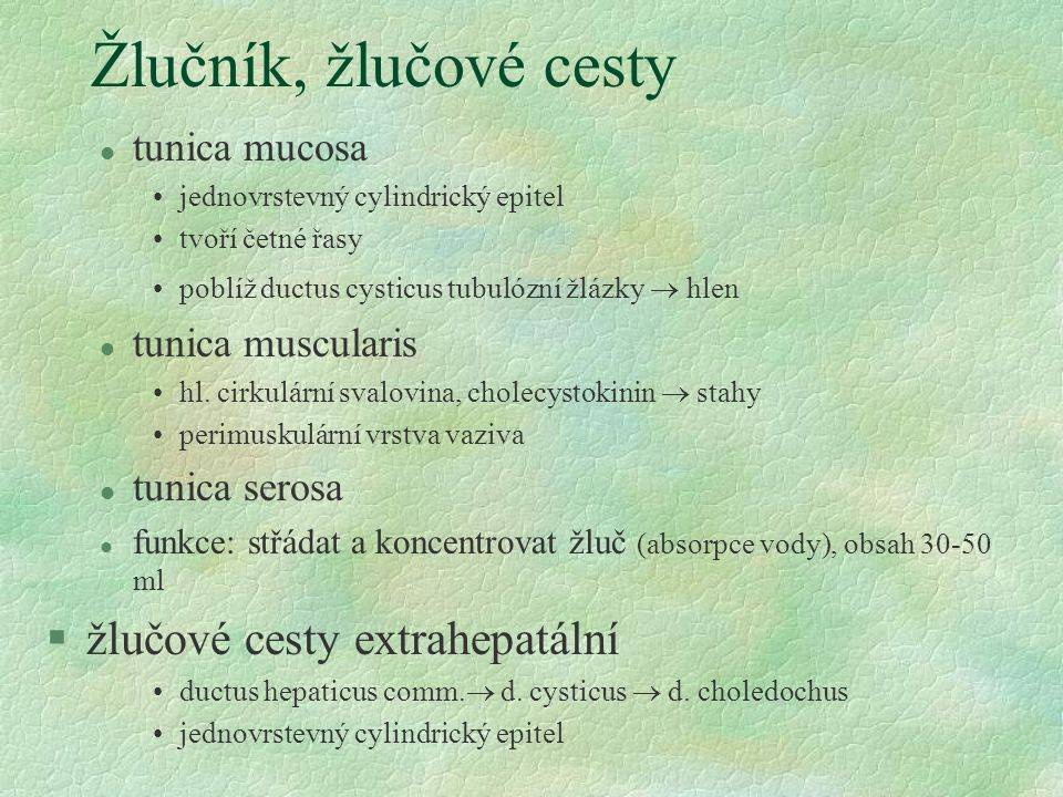 Žlučník, žlučové cesty l tunica mucosa jednovrstevný cylindrický epitel tvoří četné řasy poblíž ductus cysticus tubulózní žlázky  hlen l tunica muscu