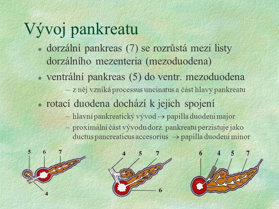 Vývoj pankreatu l dorzální pankreas (7) se rozrůstá mezi listy dorzálního mezenteria (mezoduodena) l ventrální pankreas (5) do ventr. mezoduodena –z n