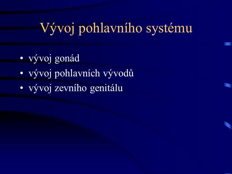 Vývoj pohlavního systému vývoj gonád vývoj pohlavních vývodů vývoj zevního genitálu