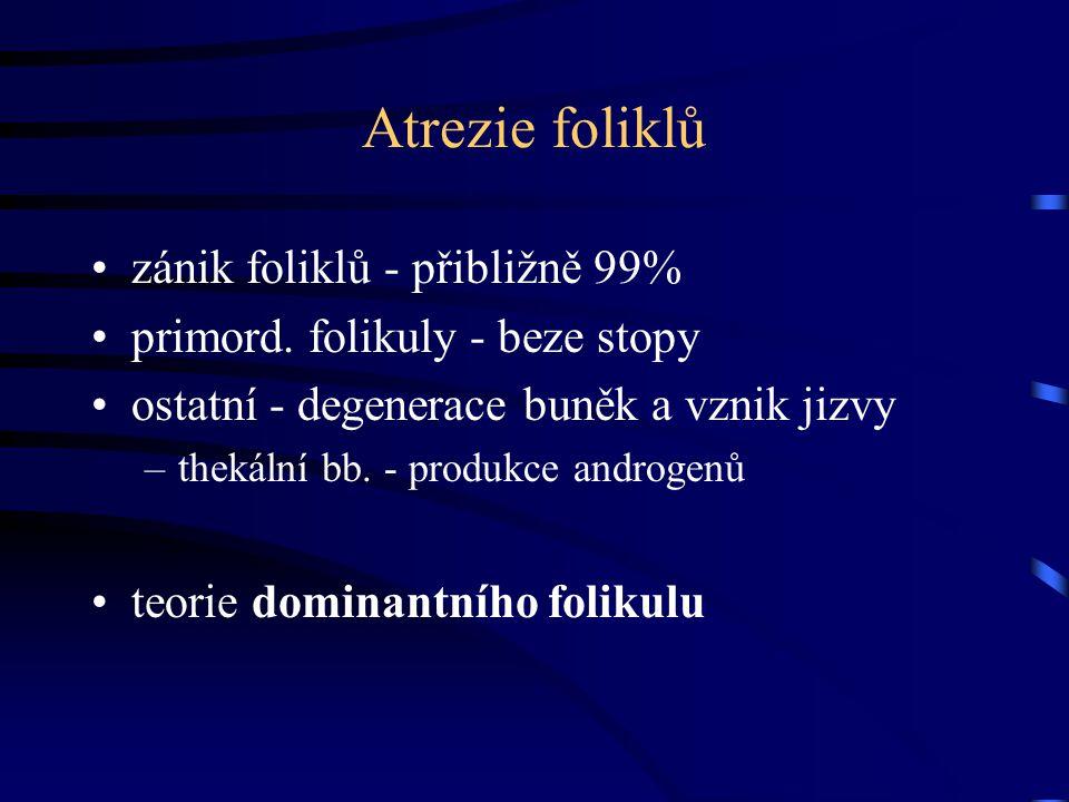 Atrezie foliklů zánik foliklů - přibližně 99% primord. folikuly - beze stopy ostatní - degenerace buněk a vznik jizvy –thekální bb. - produkce androge