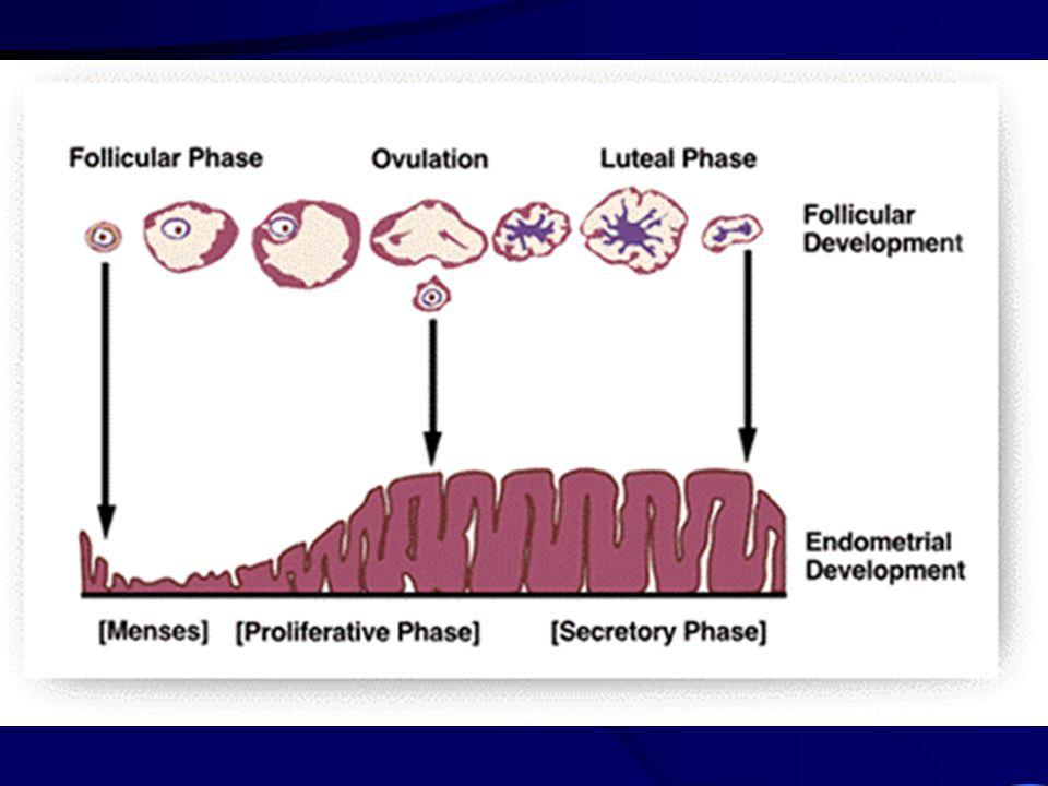 Fáze ischemická kontrakce arteriol - ischemie str. funct. vcestování leukocytů - degenerativní pochody zástava krvácení - kontrakce myometria a cév me