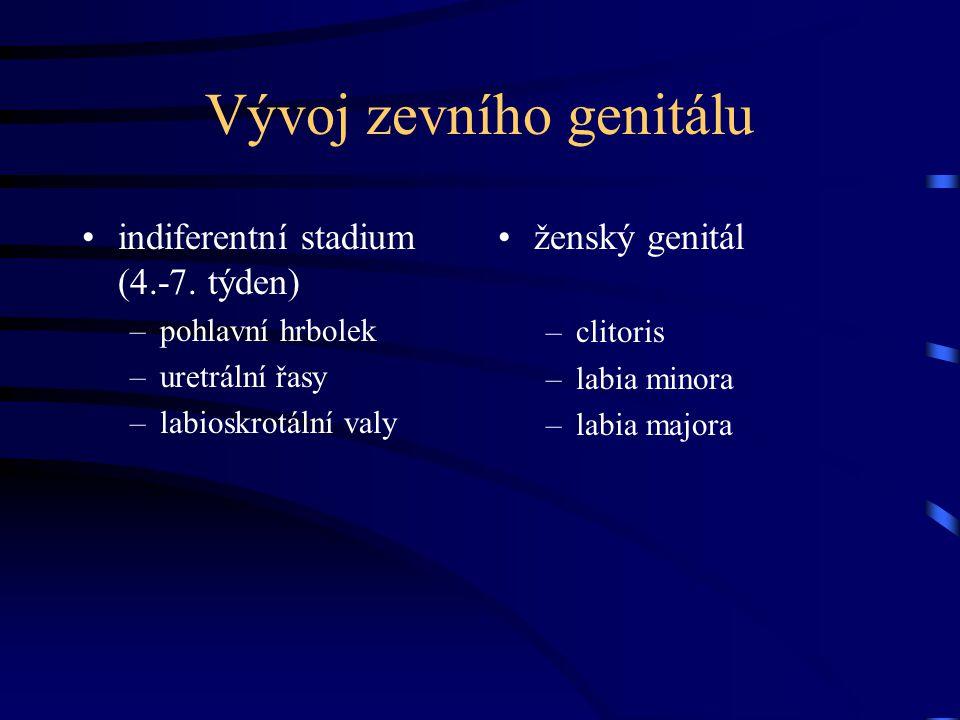 Zevní pohlavní orgány (vulva) vestibulum vaginae –gl.